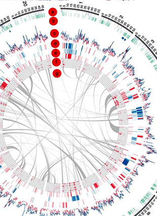 Circular genome visualization and data visualization with Circos: Resequencing of 31 wild and cultivated soybean genomes identifies patterns of genetic diversity and selection (310 x 427)
