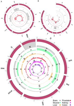 Circular genome visualization and data visualization with Circos: Analysis of cancer metabolism with high-throughput technologies (300 x 427)