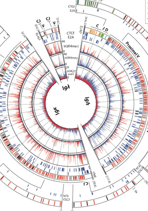 Circular genome visualization and data visualization with Circos: Chromatin topology and the regulation of antigen receptor assembly (300 x 427)