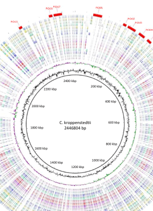 Circular genome visualization and data visualization with Circos: Microbial Comparative Genomics: An Overview of Tools and Insights Into The Genus Corynebacterium (310 x 427)