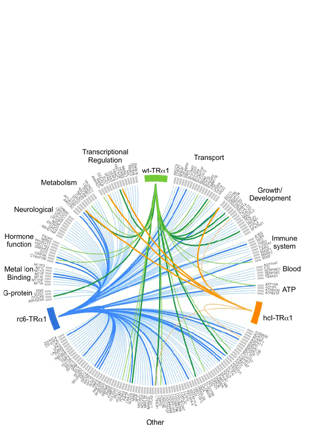 Circular genome visualization and data visualization with Circos: Mutant Thyroid Hormone Receptors (TRs) Isolated from Distinct Cancer Types Display Distinct Target Gene Specificities: A Unique Regulatory Repertoire Associated with Two Renal Clear Cell Carcinomas (310 x 427)
