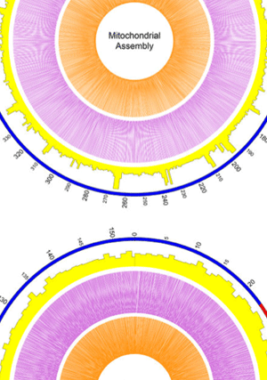 Circular genome visualization and data visualization with Circos: An efficient procedure for plant organellar genome assembly, based on whole genome data from the 454 GS FLX sequencing platform (300 x 427)