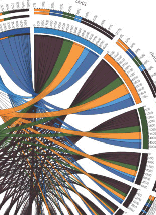 Circular genome visualization and data visualization with Circos: A locally funded Puerto Rican parrot (Amazona vittata) genome sequencing project increases avian data and advances young researcher education (310 x 427)