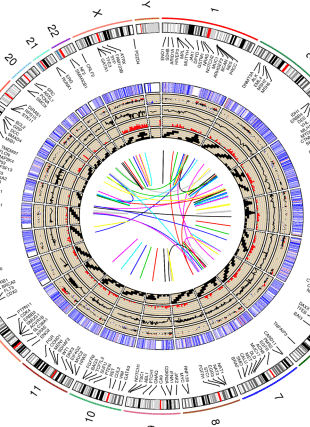 Circular genome visualization and data visualization with Circos: RCircos: an R package for Circos 2D track plots (310 x 427)
