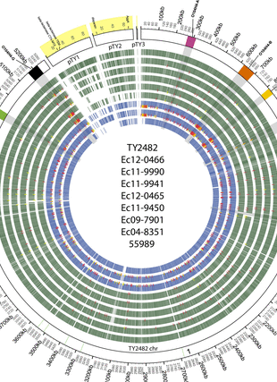 Circular genome visualization and data visualization with Circos: Comparative Genomics of Recent Shiga Toxin-Producing Escherichia coli O104:H4: Short-Term Evolution of an Emerging Pathogen (310 x 427)