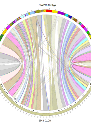 Circular genome visualization and data visualization with Circos: Whole-Genome Sequencing of Staphylococcus aureus Strain RN4220, a Key Laboratory Strain Used in Virulence Research, Identifies Mutations That Affect Not Only Virulence Factors but Also the Fitness of the Strain (310 x 427)