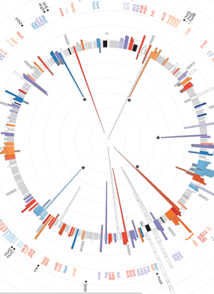 Circular genome visualization and data visualization with Circos: Population genomics of a symbiont in the early stages of a pest invasion (310 x 427)