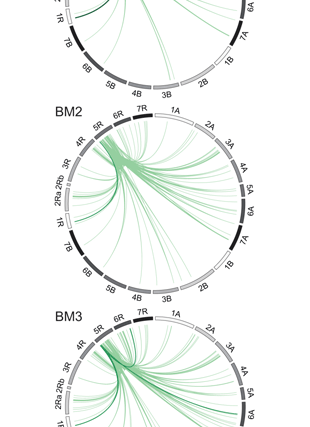 Circular genome visualization and data visualization with Circos: Precision phenotyping of biomass accumulation in triticale reveals temporal genetic patterns of regulation (310 x 427)