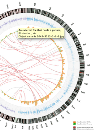 Circular genome visualization and data visualization with Circos: Characteristics of cross-hybridization and cross-alignment of expression in pseudo-xenograft samples by RNA-Seq and microarrays (310 x 427)