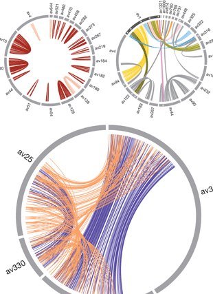 Circular genome visualization and data visualization with Circos: Genomic evidence for ameiotic evolution in the bdelloid rotifer Adineta vaga (310 x 427)