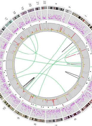 Circular genome visualization and data visualization with Circos: BRAF(L597) mutations in melanoma are associated with sensitivity to MEK inhibitors (310 x 427)