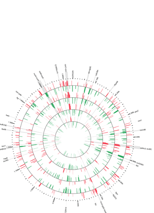 Circular genome visualization and data visualization with Circos: Use of a Rabbit Soft Tissue Chamber Model to Investigate Campylobacter jejuni - Host Interactions (310 x 427)