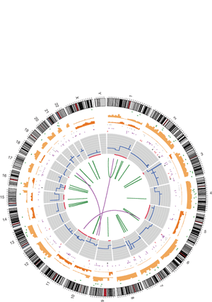Circular genome visualization and data visualization with Circos: A comprehensive catalogue of somatic mutations from a human cancer genome (300 x 427)
