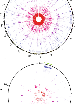 Circular genome visualization and data visualization with Circos: Phylogenetic patterns of emergence of new genes support a model of frequent de novo evolution (310 x 427)