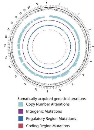 Circular genome visualization and data visualization with Circos: Genetic heterogeneity of diffuse large B-cell lymphoma (310 x 427)