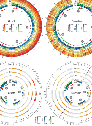 Circular genome visualization and data visualization with Circos: Translational sensitivity of the Escherichia coli genome to fluctuating tRNA availability (310 x 427)