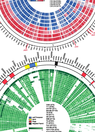 Circular genome visualization and data visualization with Circos: Comparative Genomics of Enterococci: Variation in Enterococcus faecalis, Clade Structure in E. faecium, and Defining Characteristics of E. gallinarum and E. casseliflavus (310 x 429)