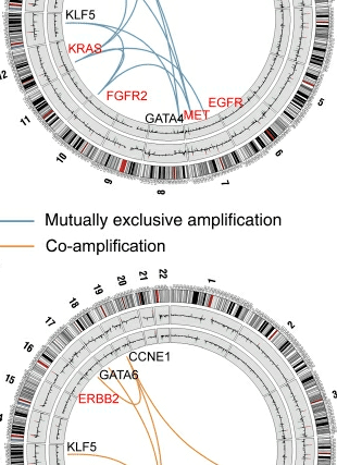 Circular genome visualization and data visualization with Circos: A comprehensive survey of genomic alterations in gastric cancer reveals systematic patterns of molecular exclusivity and co-occurrence among distinct therapeutic targets (310 x 427)