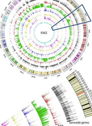 Circular genome visualization and data visualization with Circos: Classification of human genomic regions based on experimentally determined binding sites of more than 100 transcription-related factors (310 x 427)