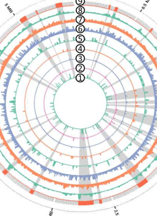 Circular genome visualization and data visualization with Circos: GIV: A Tool for Genomic Islands Visualization (310 x 427)