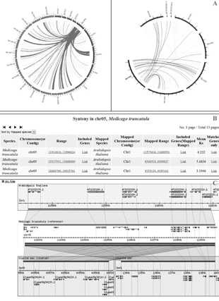 Circular genome visualization and data visualization with Circos: LegumeIP: an integrative database for comparative genomics and transcriptomics of model legumes (310 x 427)