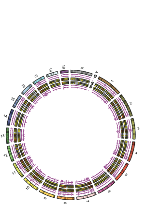 Circular genome visualization and data visualization with Circos: The endonuclease activity of Mili fuels piRNA amplification that silences LINE1 elements (300 x 427)