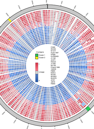Circular genome visualization and data visualization with Circos: Evolutionary Dynamics of the Accessory Genome of Listeria monocytogenes (310 x 427)