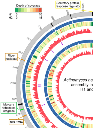 Circular genome visualization and data visualization with Circos: Deep sequencing of the oral microbiome reveals signatures of periodontal disease (310 x 427)