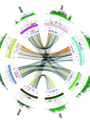 Circular genome visualization and data visualization with Circos: Genome-wide profiling reveals stimulus-specific functions of p53 during differentiation and DNA damage of human embryonic stem cells (310 x 427)
