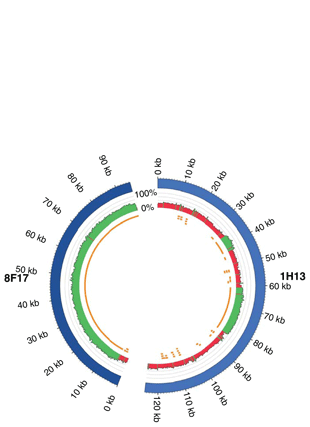 Circular genome visualization and data visualization with Circos: A first genome assembly of the barley fungal pathogen Pyrenophora teres f. teres (310 x 427)