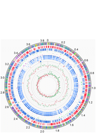 Circular genome visualization and data visualization with Circos: The Arthrobacter arilaitensis Re117 Genome Sequence Reveals Its Genetic Adaptation to the Surface of Cheese (310 x 427)