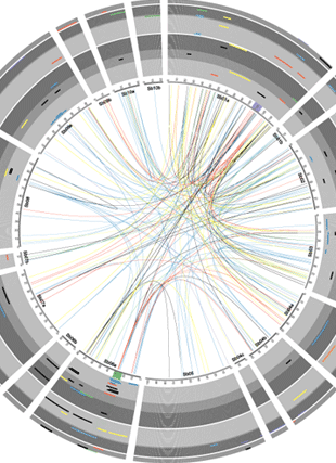 Circular genome visualization and data visualization with Circos: Unravelling the genetic complexity of sorghum seedling development under low temperature conditions (310 x 427)