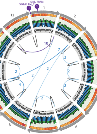 Circular genome visualization and data visualization with Circos: Complete sequence representation across human X and Y centromeric regions (310 x 427)