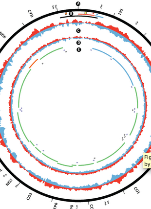 Circular genome visualization and data visualization with Circos: Genome-Wide Analysis Reveals Coating of the Mitochondrial Genome by TFAM (310 x 427)