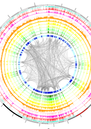 Circular genome visualization and data visualization with Circos: Comprehensive Identification and Annotation of Cell Type-Specific and Ubiquitous CTCF-Binding Sites in the Human Genome (300 x 427)