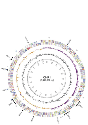 Circular genome visualization and data visualization with Circos: The complete genome sequence of Cupriavidus metallidurans strain CH34, a master survivalist in harsh and anthropogenic environments (300 x 427)