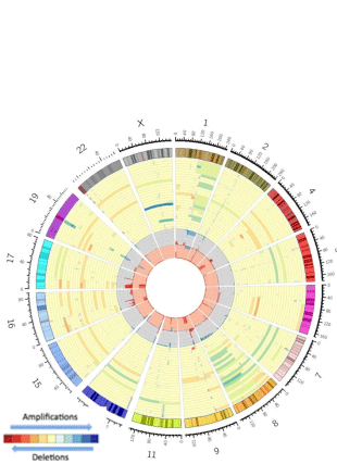 Circular genome visualization and data visualization with Circos:  (310 x 427)