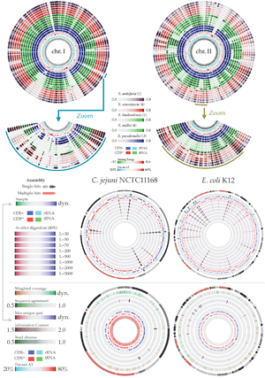 Circular genome visualization and data visualization with Circos: GeneWiz browser: An Interactive Tool for Visualizing Sequenced Chromosomes (300 x 427)