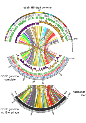 Circular genome visualization and data visualization with Circos: A novel human-infection-derived bacterium provides insights into the evolutionary origins of mutualistic insect-bacterial symbioses (300 x 427)