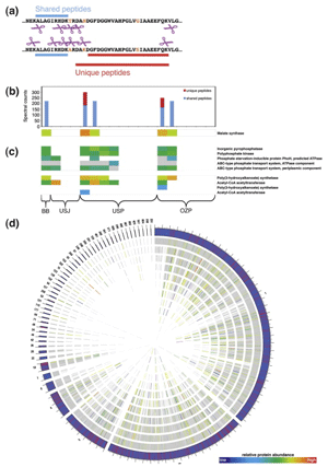 Circular genome visualization and data visualization with Circos: Microbial community proteomics: elucidating the catalysts and metabolic mechanisms that drive the Earth