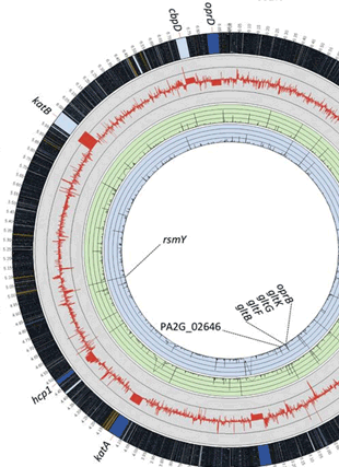 Circular genome visualization and data visualization with Circos: Transcriptional response of mucoid Pseudomonas aeruginosa to human respiratory mucus (310 x 427)