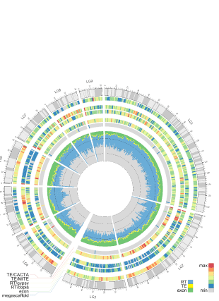 Circular genome visualization and data visualization with Circos: Genome of the long-living sacred lotus (Nelumbo nucifera Gaertn.) (310 x 427)