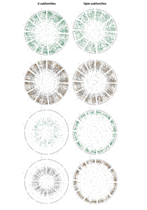 Circular genome visualization and data visualization with Circos: The turbulent life of Sirevirus retrotransposons and the evolution of the maize genome: more than ten thousand elements tell the story (300 x 427)