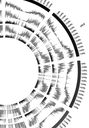 Circular genome visualization and data visualization with Circos: Transcriptome de novo assembly from next-generation sequencing and comparative analyses in the hexaploid salt marsh species Spartina maritima and Spartina alterniflora (Poaceae) (300 x 427)