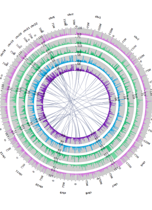 Circular genome visualization and data visualization with Circos: Web-based visual analysis for high-throughput genomics (310 x 427)